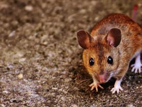大鼠的伏隔核对海洛因戒断后情绪的影响